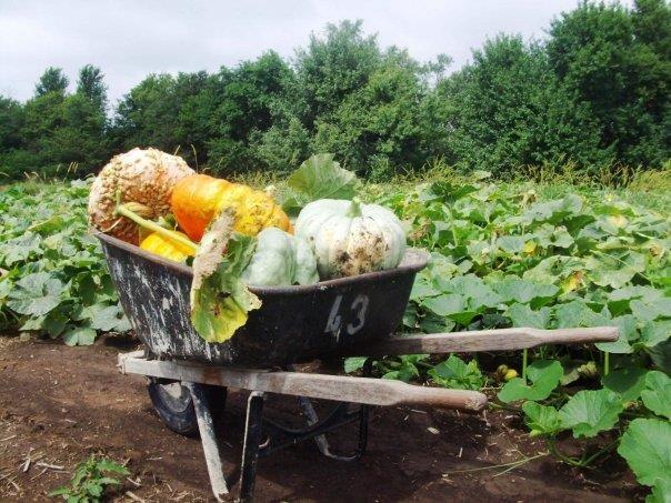 Johnson farms pumpkin patch belton mo
